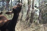 Hans Haacke, Goat Feeding in Woods, 1970 © Hans Haacke / VG Bild-Kunst, Bonn 2019